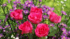 Çiçek İsimleri