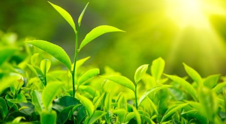 Adını Duymadığımız Bitkiler