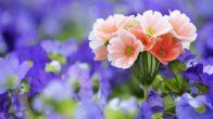 Çiçek Özel Gün Mesajları