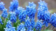 Çiçeklerin Anlamları Nedir ?