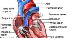 Kalp Deliğine Ameliyatsız Çözüm