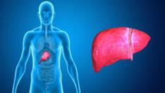 Karaciğer Büyümesi
